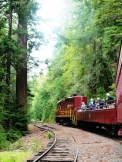 skunk-train-winding-through-the-redwoods